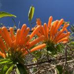 Eine Bildergalerie mit der bunten Kanarenflora