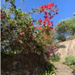 Ein rot blühender Hibiscus im Park de los Lavaderos